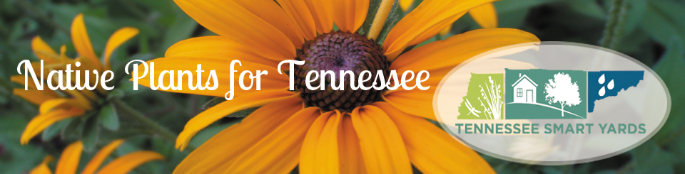 This image has an empty alt attribute; its file name is Tennessee-Smart-Yards-Flower-logo.jpg