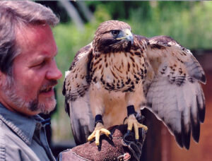 Stephen Lyn Bales with Red Tailed Hawk