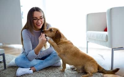 Our Favorite Apartment-Friendly Pets