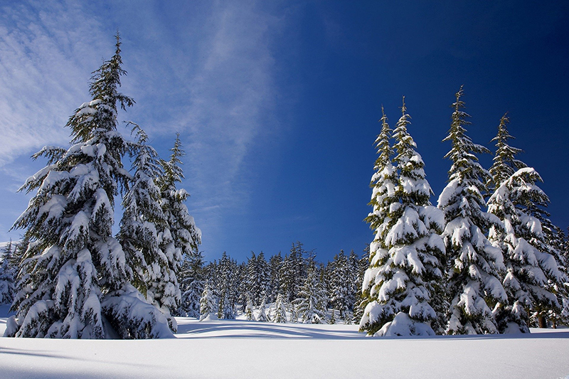 Snow, mountains and trees inspire a sense of wonder.