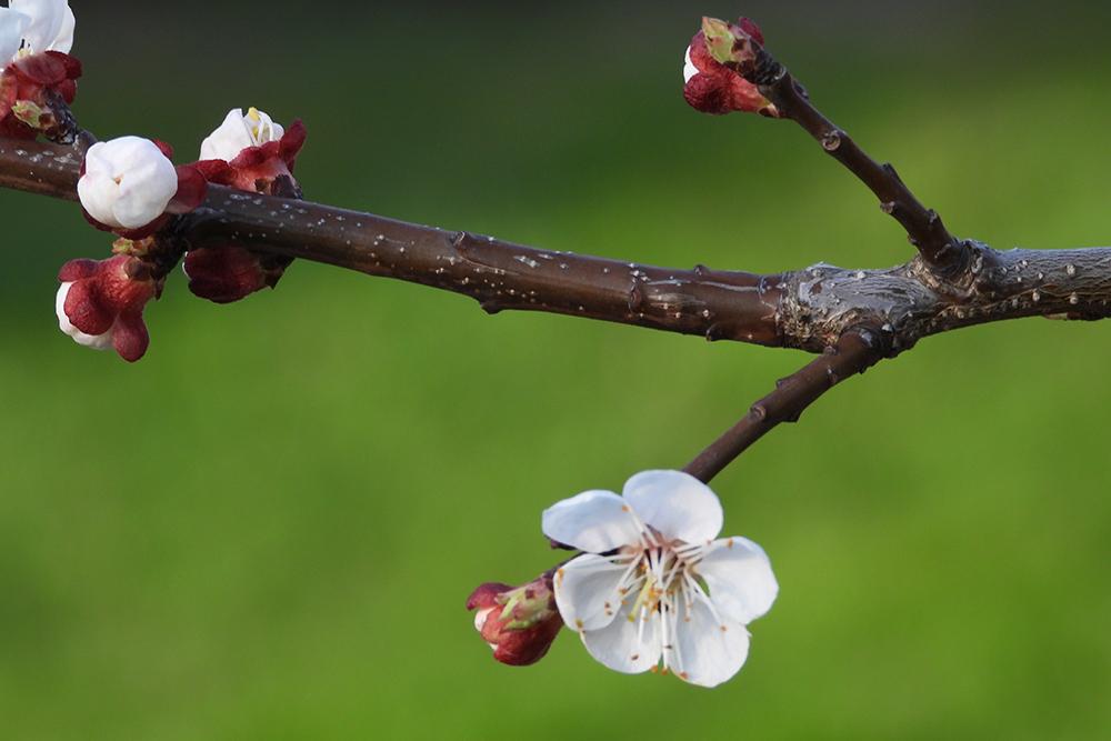 Budding flower on branch