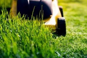 scalping-lawn-four-seasons-portland-oregon