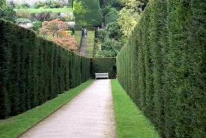hedging-landscaping-portland-oregon