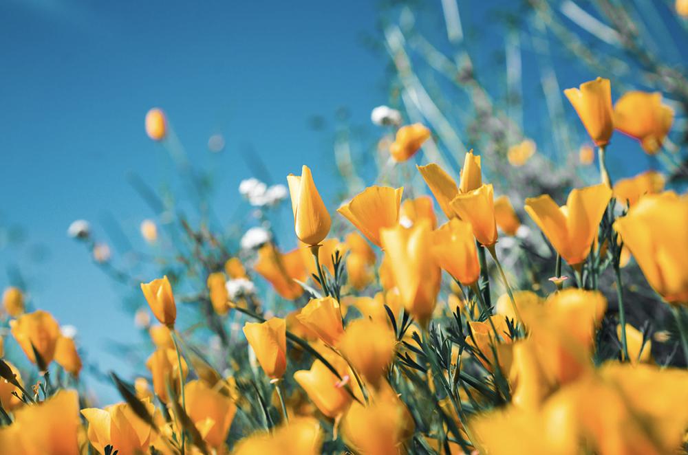 Springtime-Plumbing-Tips-and-Tricks