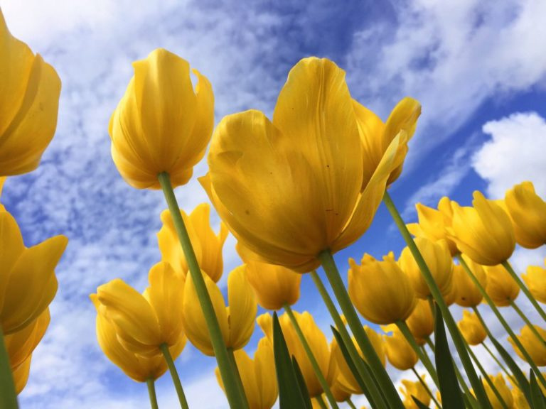 Spring Ideas for Teens