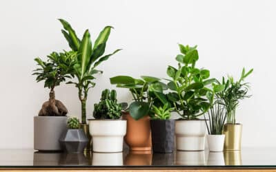 Three Plants to Grow in Your Apartment That Help Preserve Clean Air