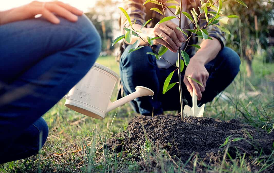 two people planting