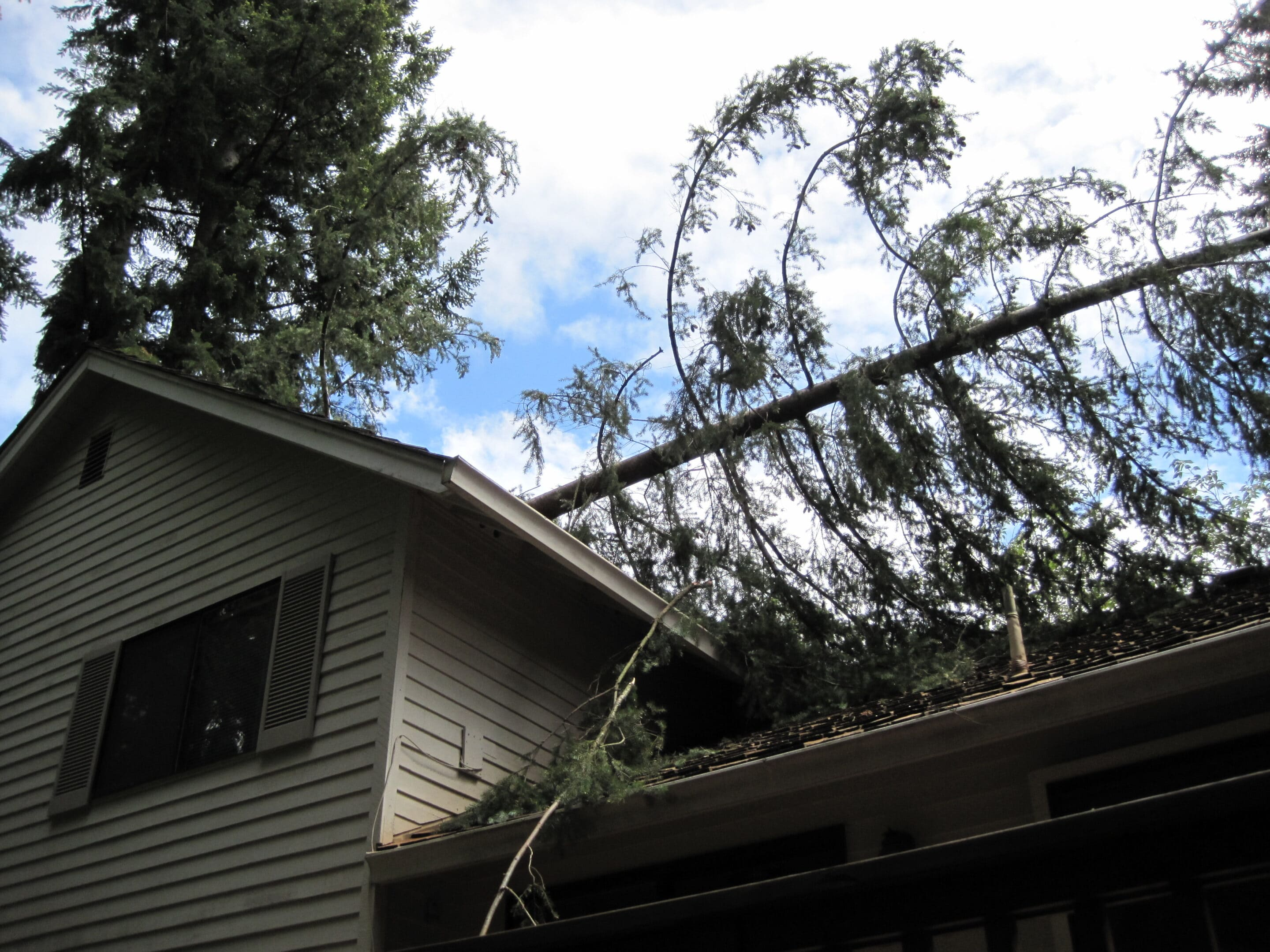 structural engineering for tree damage