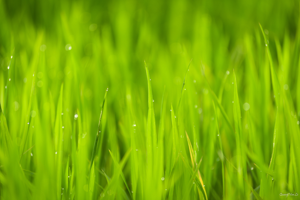 Is Your Lawn Full of Weeds? Take an Eco-Friendly Approach to Make It Beautiful