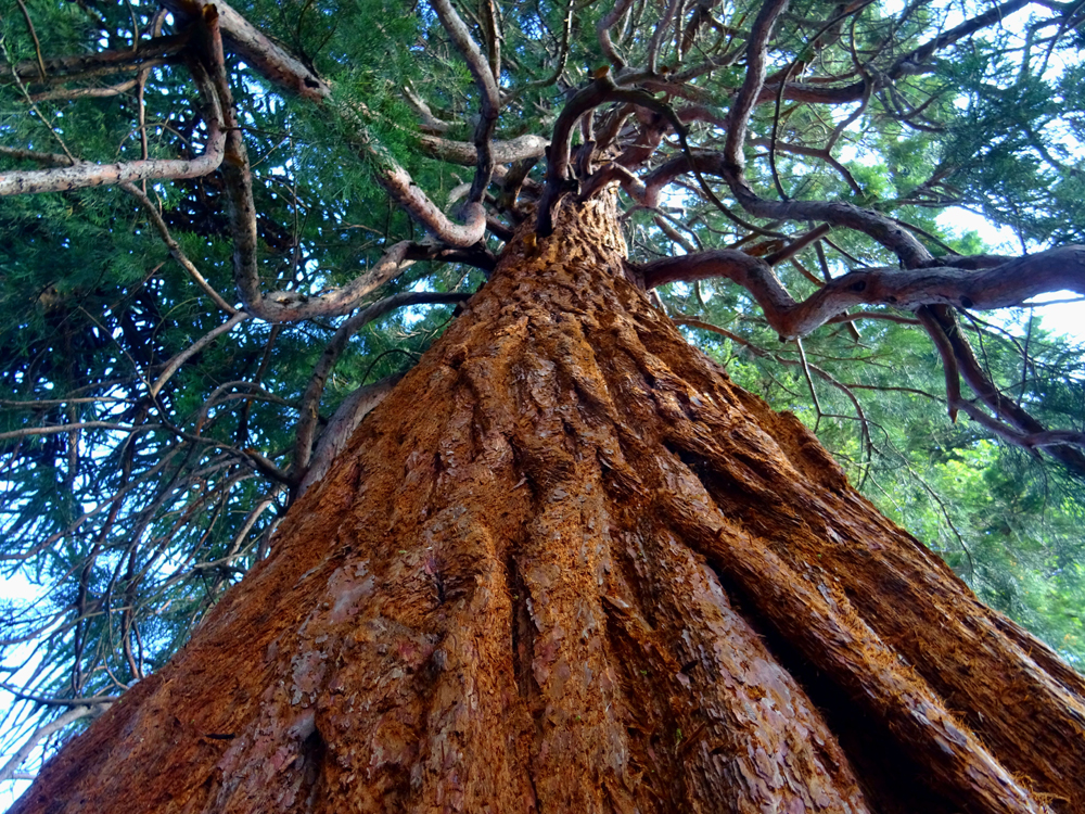 Time Spent With Trees is Proven to Improve Your Health and Wellness