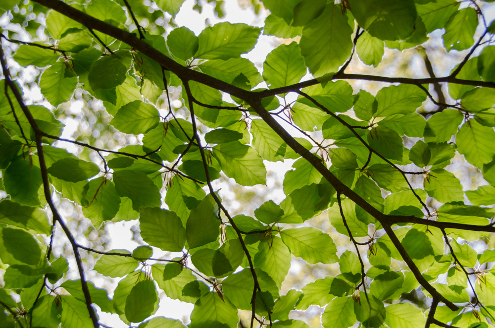 The Do's and Don'ts of Tree Care
