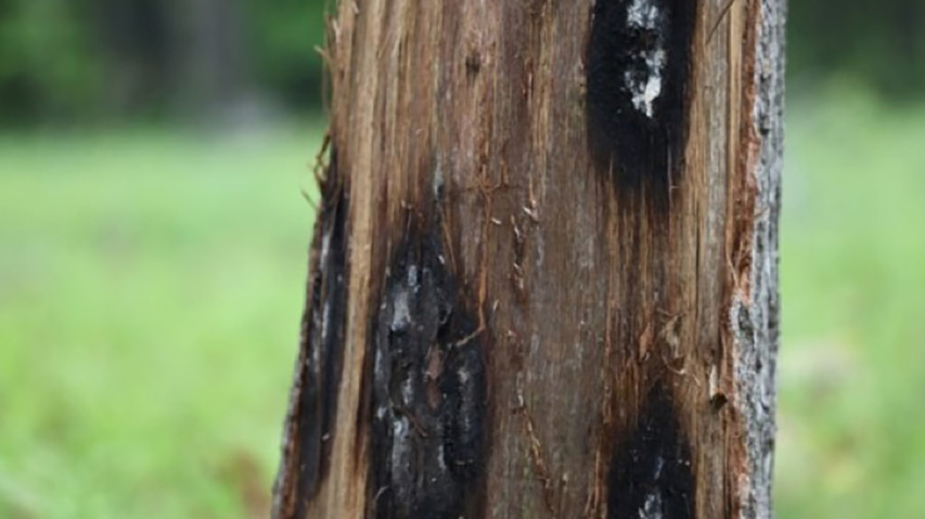 Spring is Here! Now is the Time to Prevent Fungal Issues