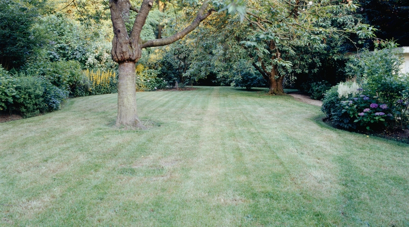 Lawn Turning Brown? Meet Moisture Manager