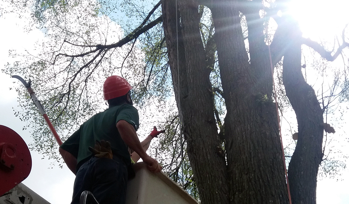 Our Certified Arborists are the Tree Care Experts of Metro Detroit
