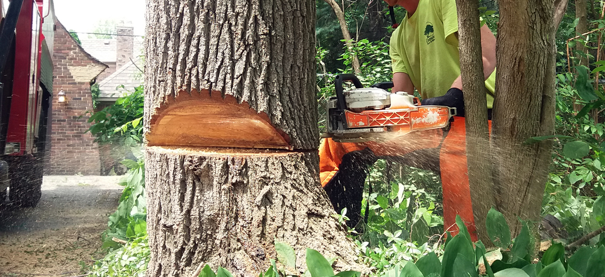 The Risk of Working With Unlicensed or Uninsured Tree Workers