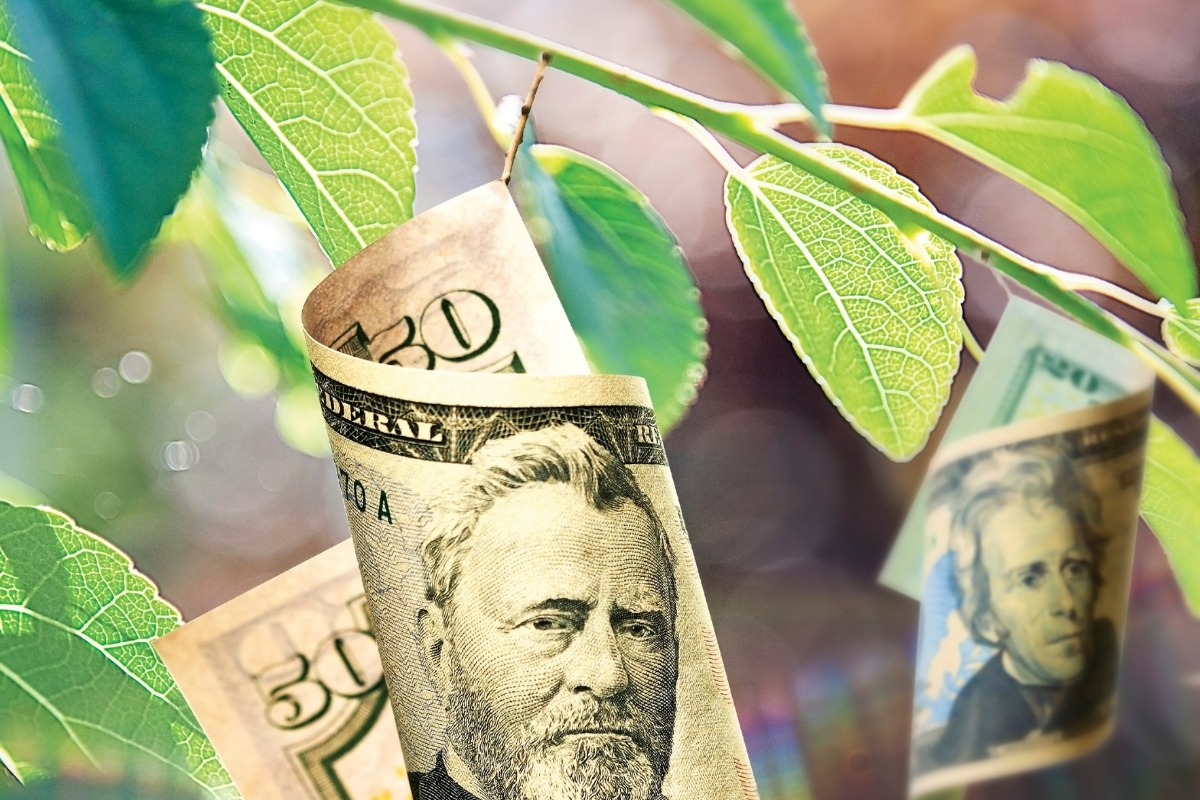 Your Trees Are Literally Worth Money —Keep Them Healthy!