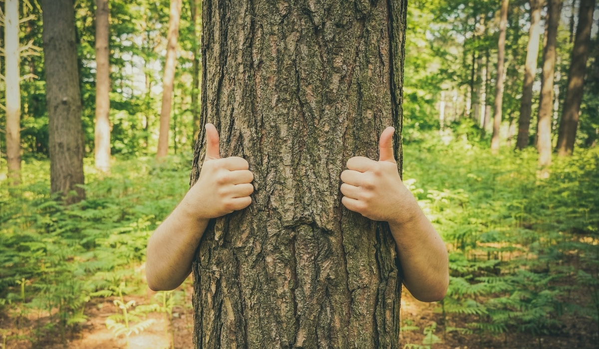 Our Arborists are the Eco-Friendly Experts of Metro Detroit