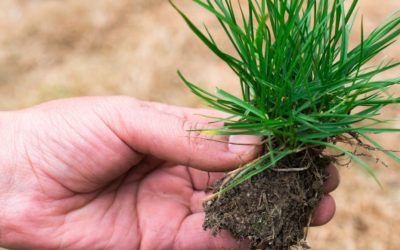 How to Develop Healthy Root Zones Through Good Soil Management