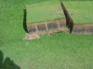 black-layer-turf
