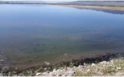 Toxicity Treatment in a Wastewater Lagoon System
