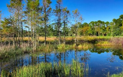 Bioaugmentation Improves Water Clarity in Freshwater Pond