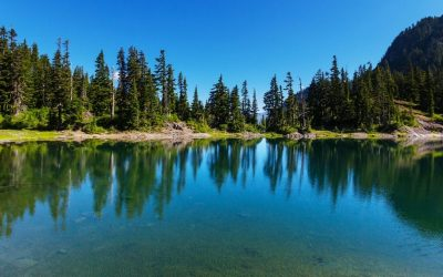 Improving Water Clarity in Freshwater Lakes