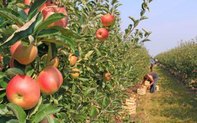Organic Farm Testimonial