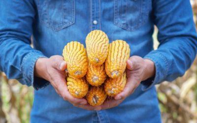 Corn Testimonial