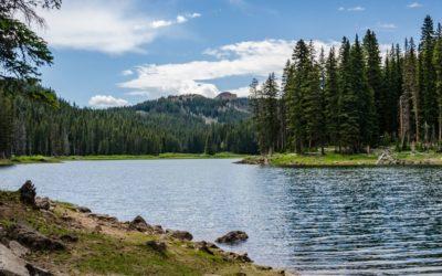 Freshwater Remediation Testimonial