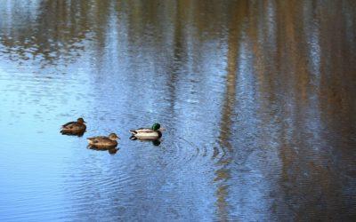 Pond Clarity Testimonial