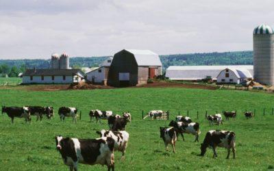 Dairy Waste Lagoon Testimonial