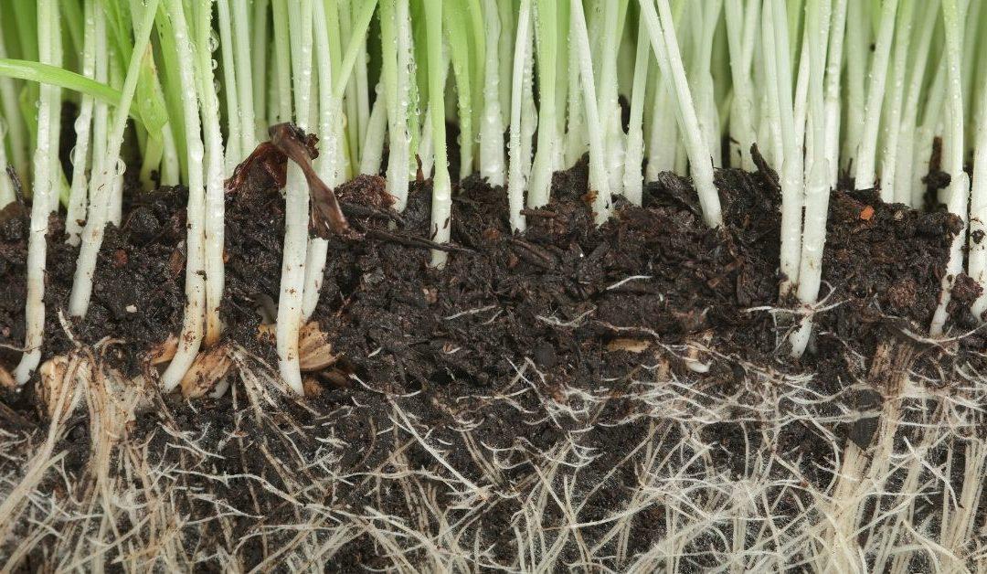 Root Development Testimonial