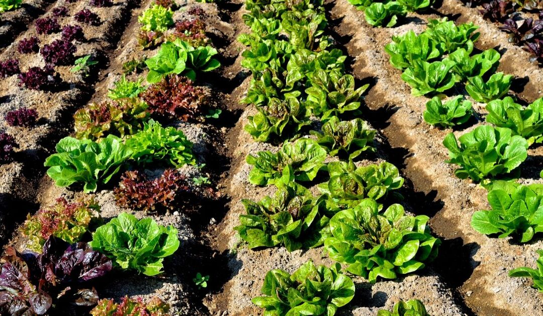 Soil, Microbes and Water Management