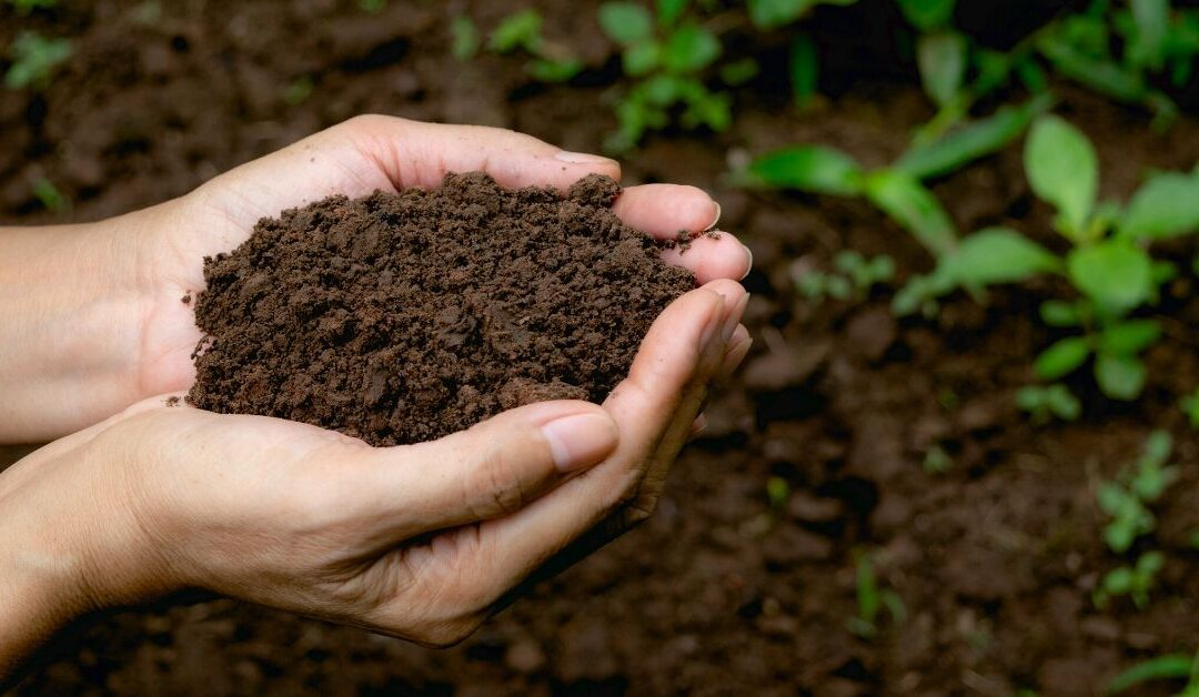 Soil Microbes and Nutrient Uptake