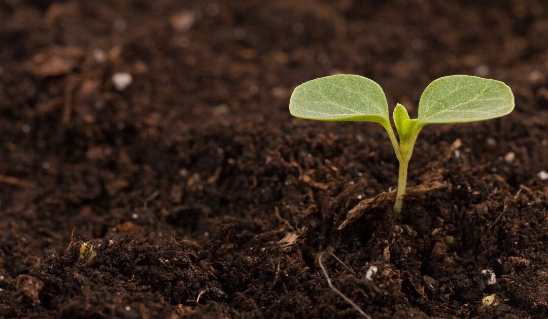 Why All Humic Acids Are Not Created Equal