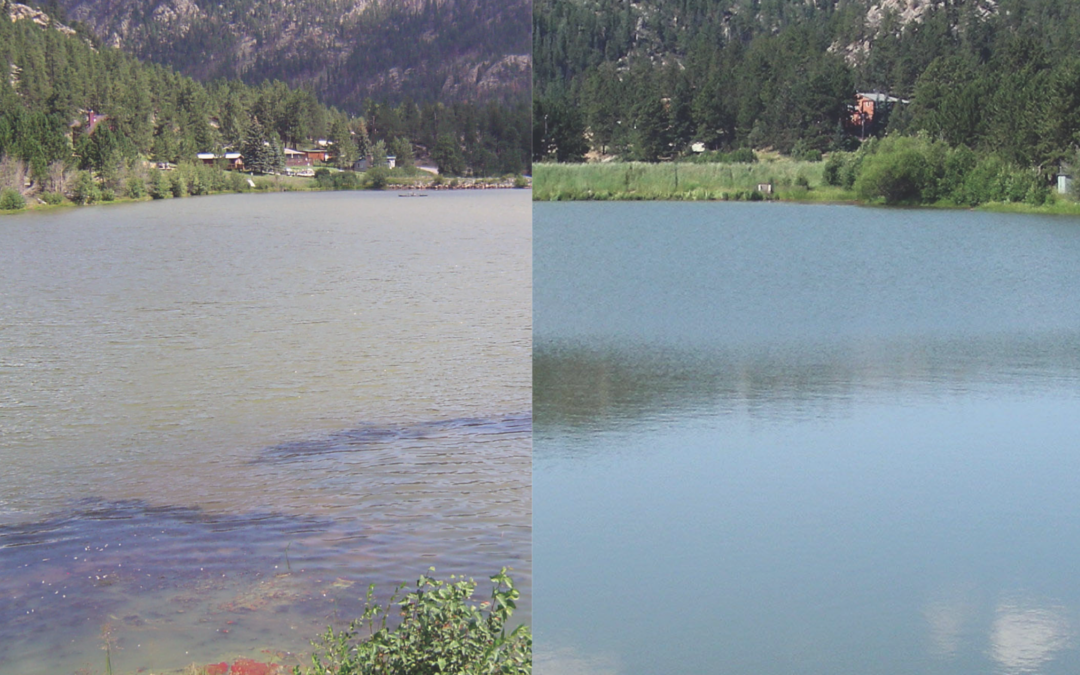 Improving Water Quality in Freshwater Lakes