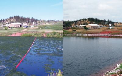 Water Clarity Bioaugmentation in a Freshwater Pond
