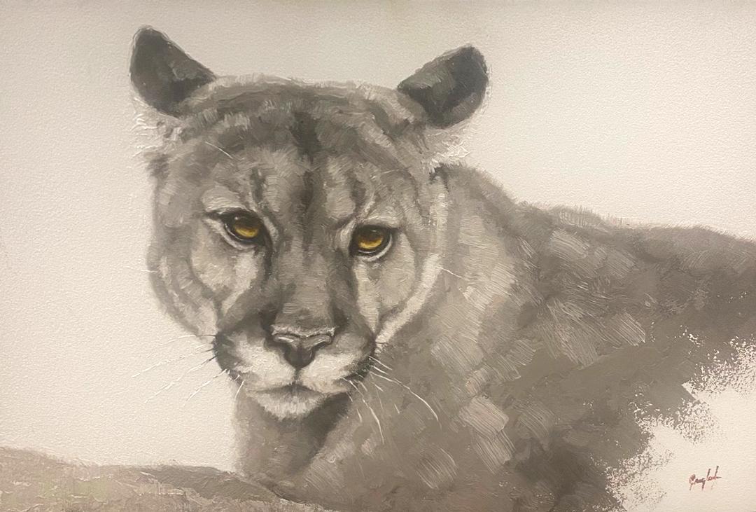Montgomery-Lee Fine Art   Mountain Lion Study