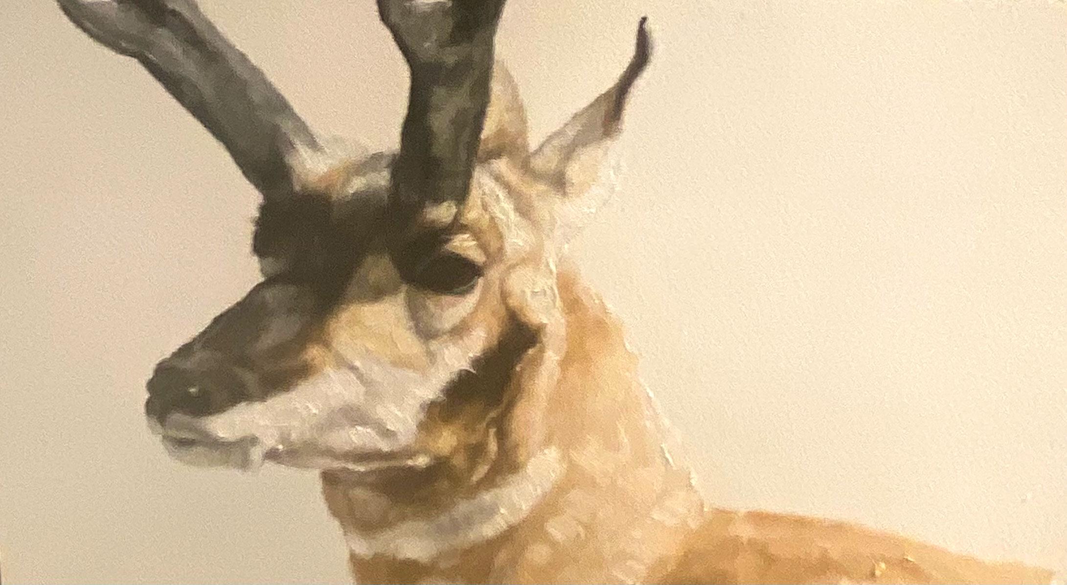 Montgomery-Lee Fine Art   Antelope Study #3