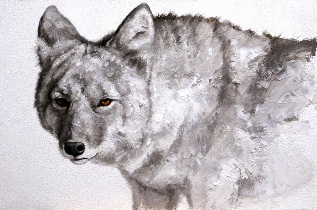 Montgomery-Lee Fine Art | Coyote #1