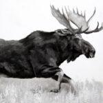 Moose Study III