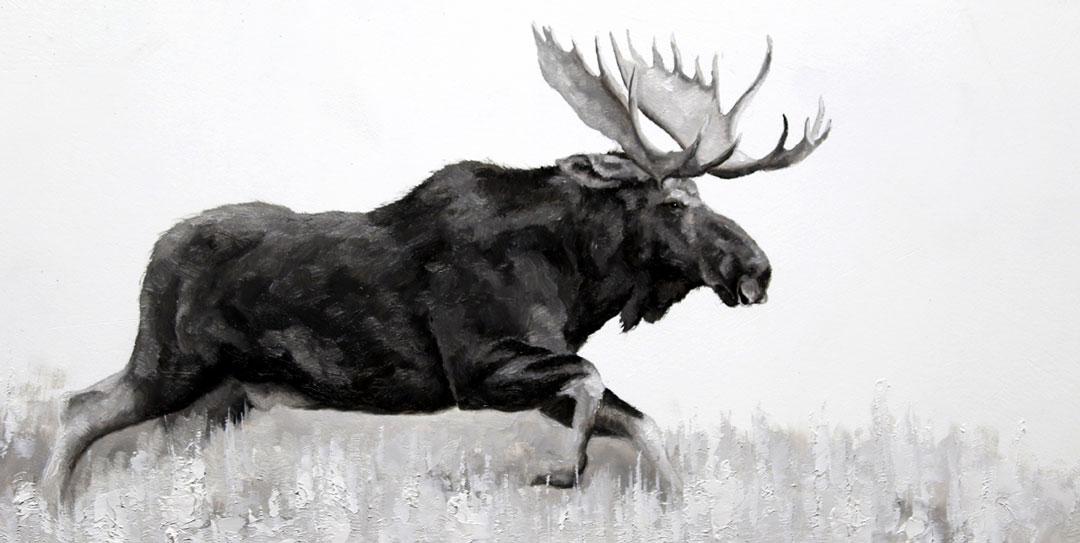 Montgomery-Lee Fine Art   Moose Study III