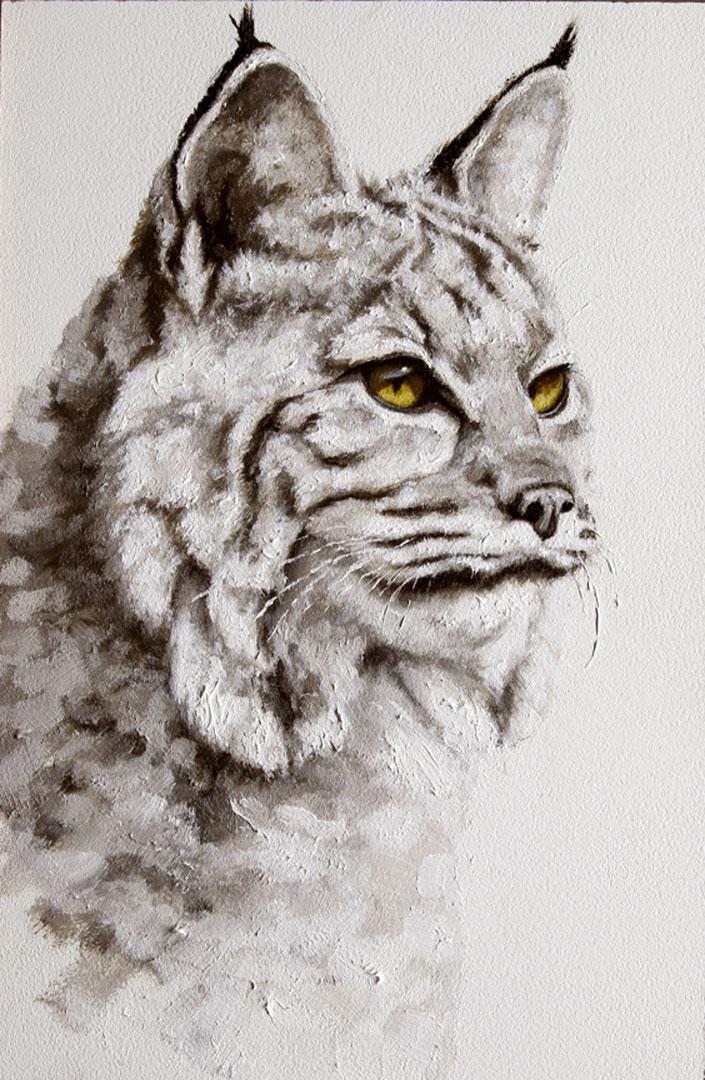 Montgomery-Lee Fine Art   Bobcat #2