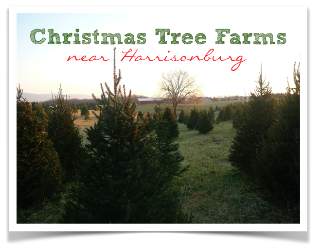 Christmas Tree Farms Near Harrisonburg