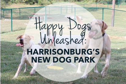 Happy dogs unleashed dog park
