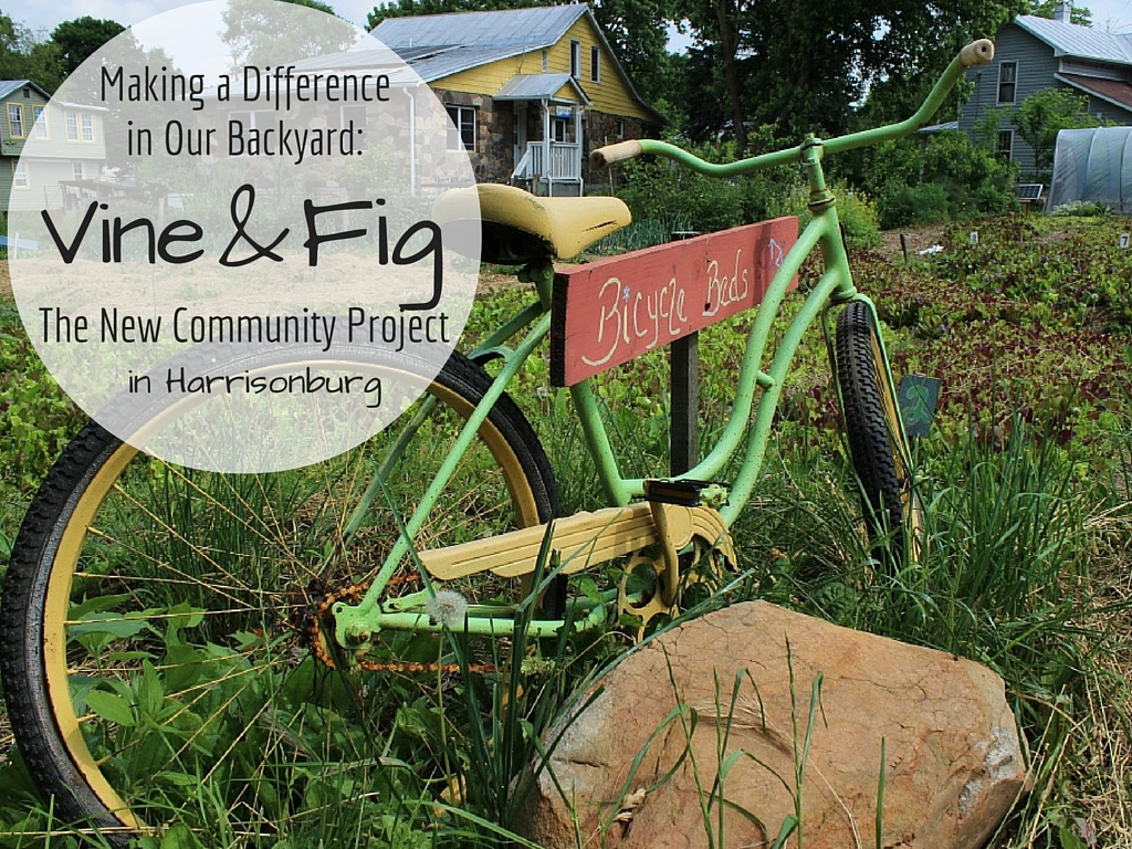 Vine & Fig | The New Community Project | Harrisonburg