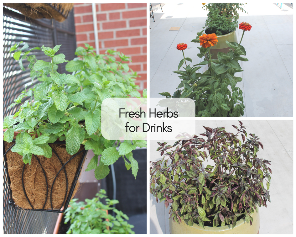 Herbs on the Rooftop   The Harrisonburg Homes Team