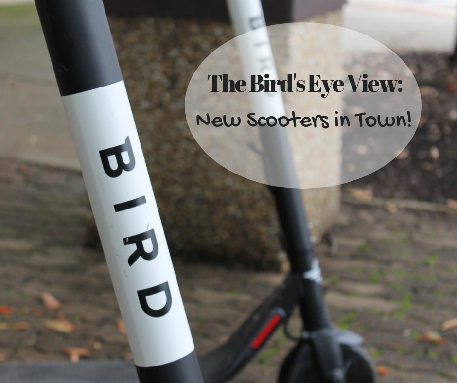 Bird Scooters   Harrisonburg Homes Team