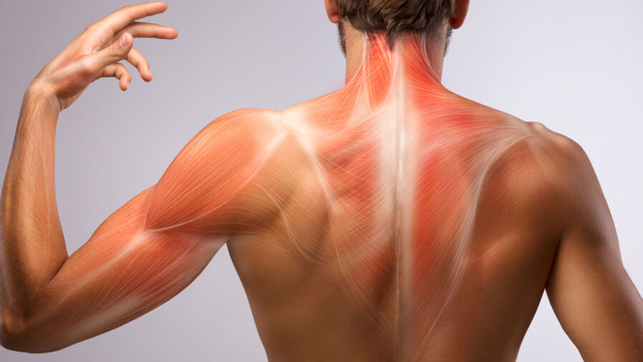 Tecido Fascial e a sua relação com a biomecânica do corpo
