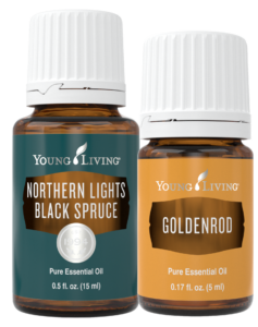 Northern Lights Black Spruce and Goldenrod